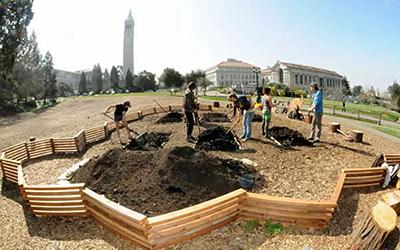students gardening on UC Berkeley campus