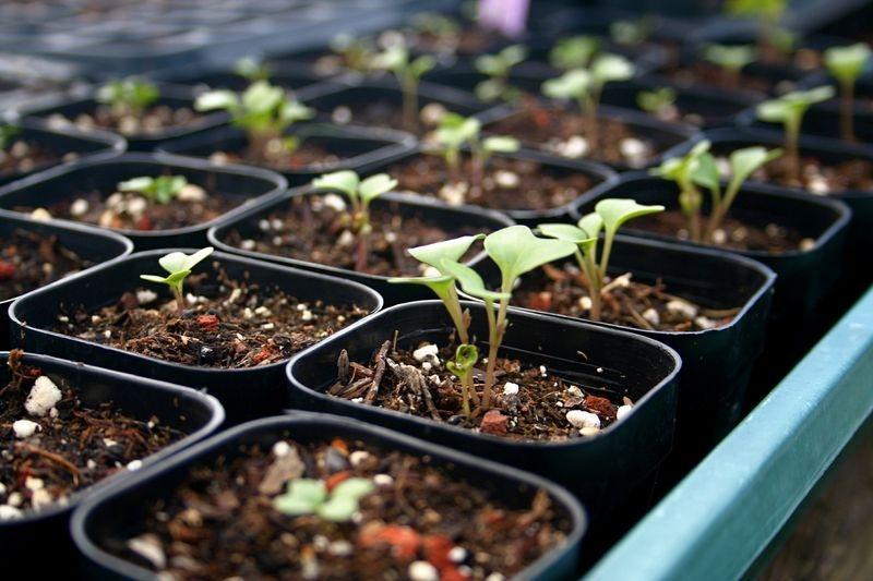 seedlings in a garden