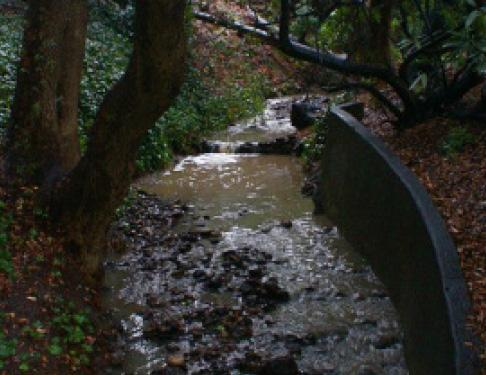 Strawberry Creek, UC Berkeley campus