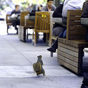 squirrel perusing an outdoor campus cafe