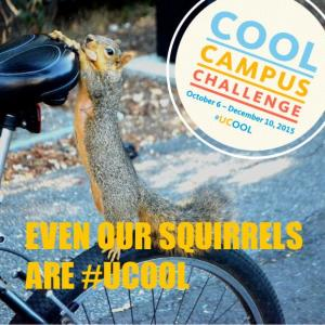 Cool Campus Challenge meme squirrel