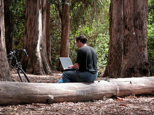 student working on laptop in a eucalyptus grove