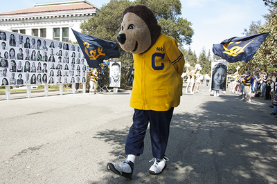 Oski bear walking on campus